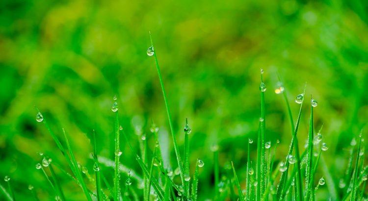 kleszcze żyjące w trawie